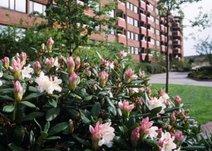 Rudedammsgatan 6, Centrum