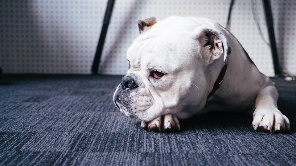 Hund på WTC.jpg