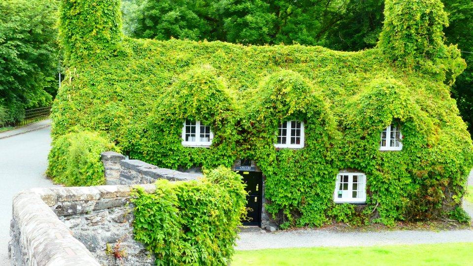 gröna hus.jpg
