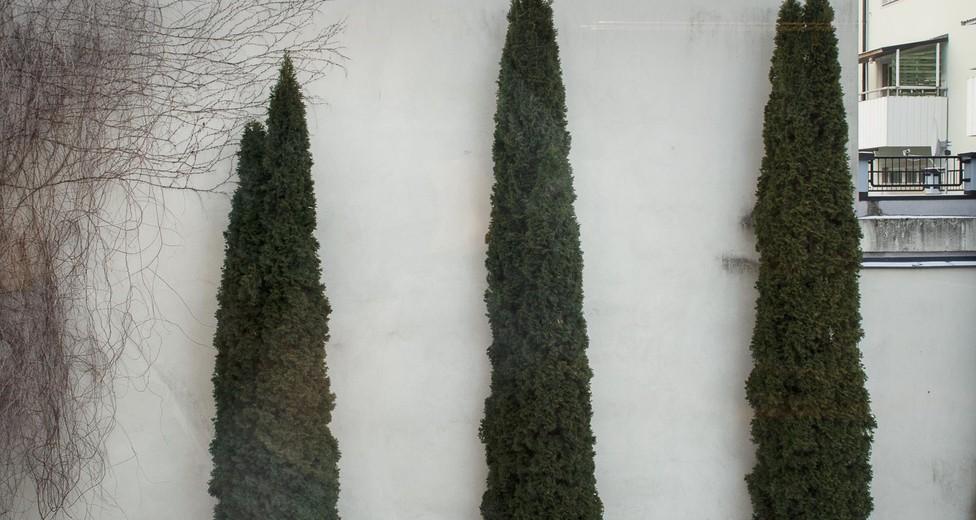utsikt trädgård
