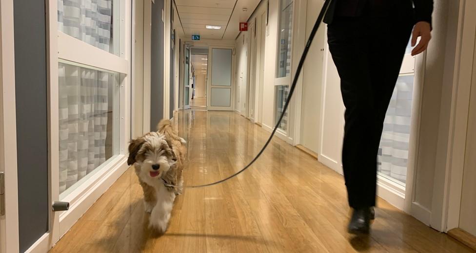 korridor med kontor dit hunden är välkommen